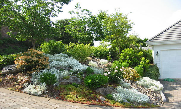 Xeriscaping Not Zeroscaping On Pinterest Xeriscaping