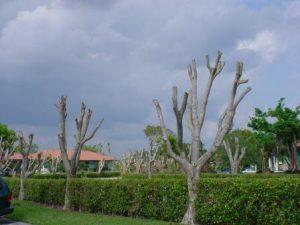 hrack-tree-300x225